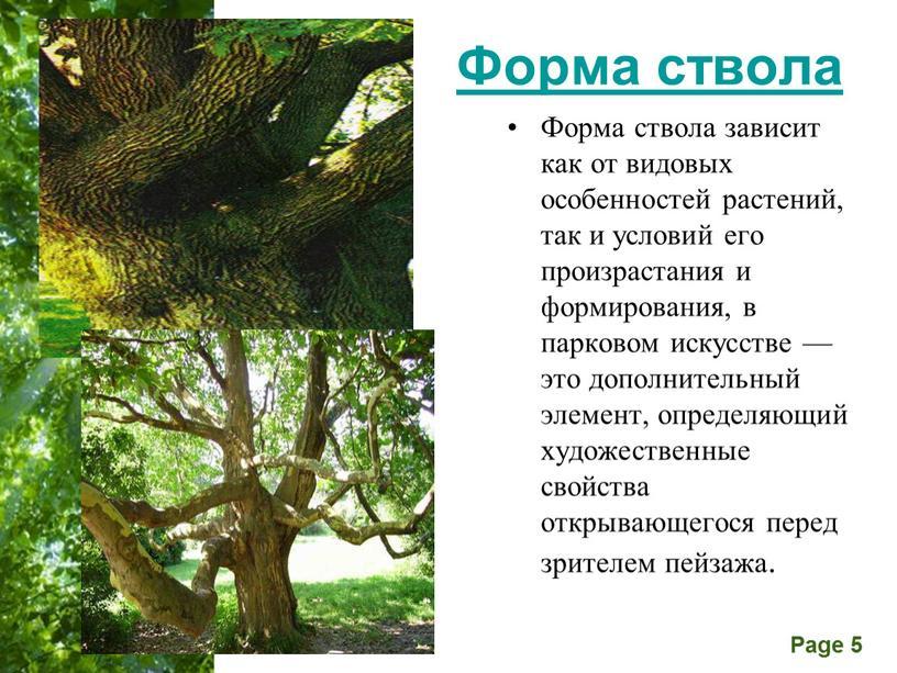 Форма ствола Форма ствола зависит как от видовых особенностей растений, так и условий его произрастания и формирования, в парковом искусстве — это дополнительный элемент, определяющий…