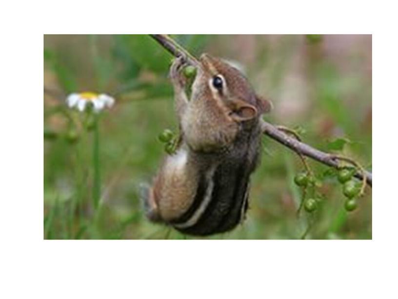 """Презентация о животных """"Экология для маленьких"""""""