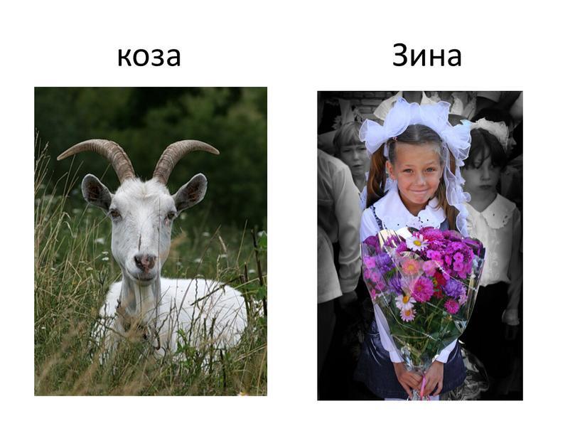 коза Зина