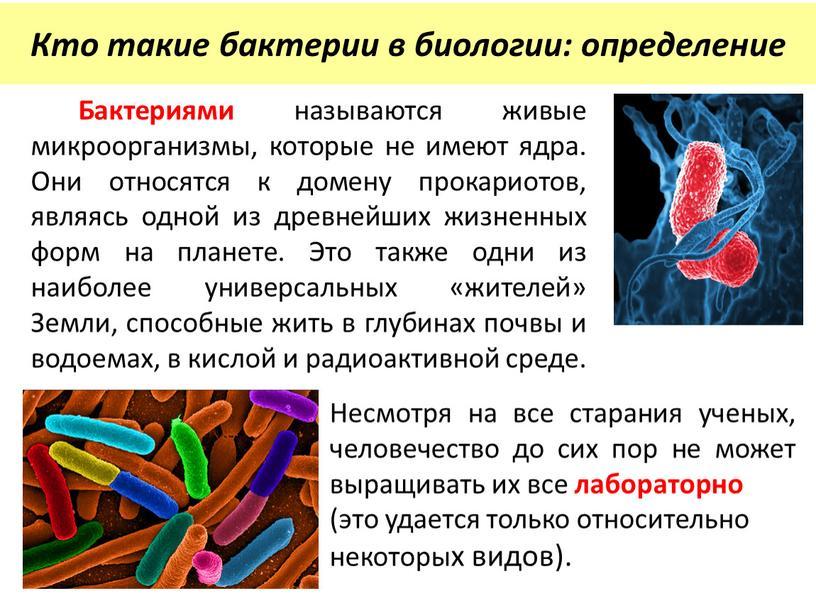 Бактериями называются живые микроорганизмы, которые не имеют ядра