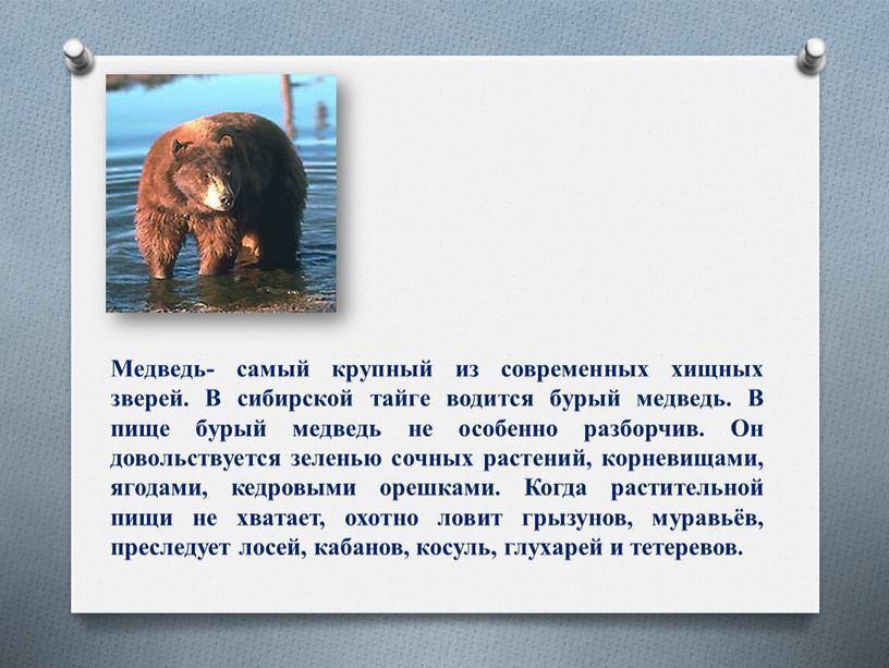 Медведь- самый крупный из современных хищных зверей