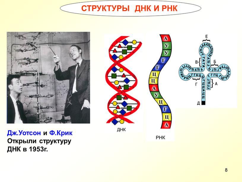 СТРУКТУРЫ ДНК И РНК Дж.Уотсон и