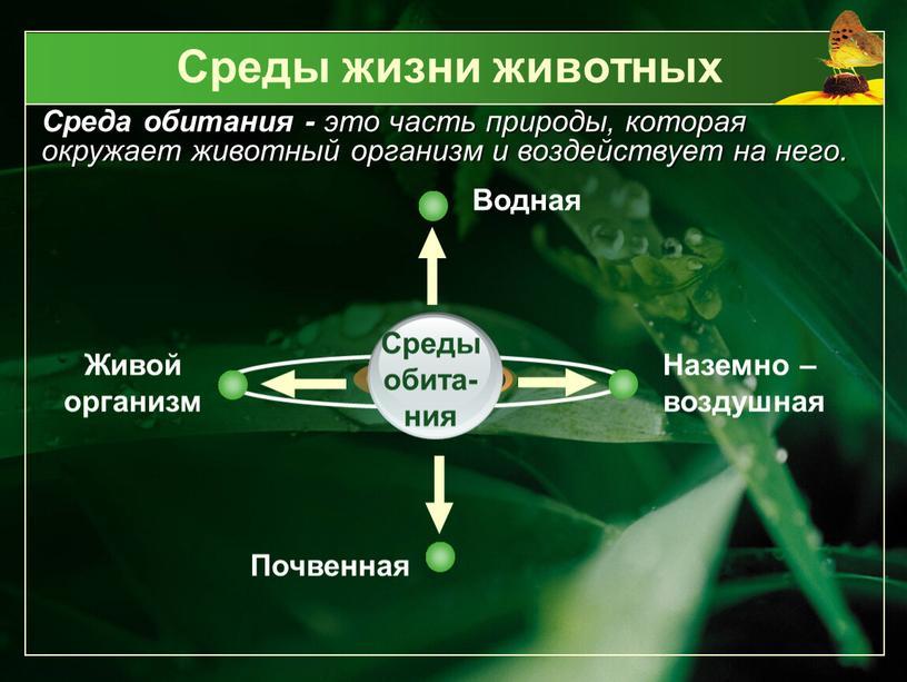 Среды жизни животных Среда обитания - это часть природы, которая окружает животный организм и воздействует на него