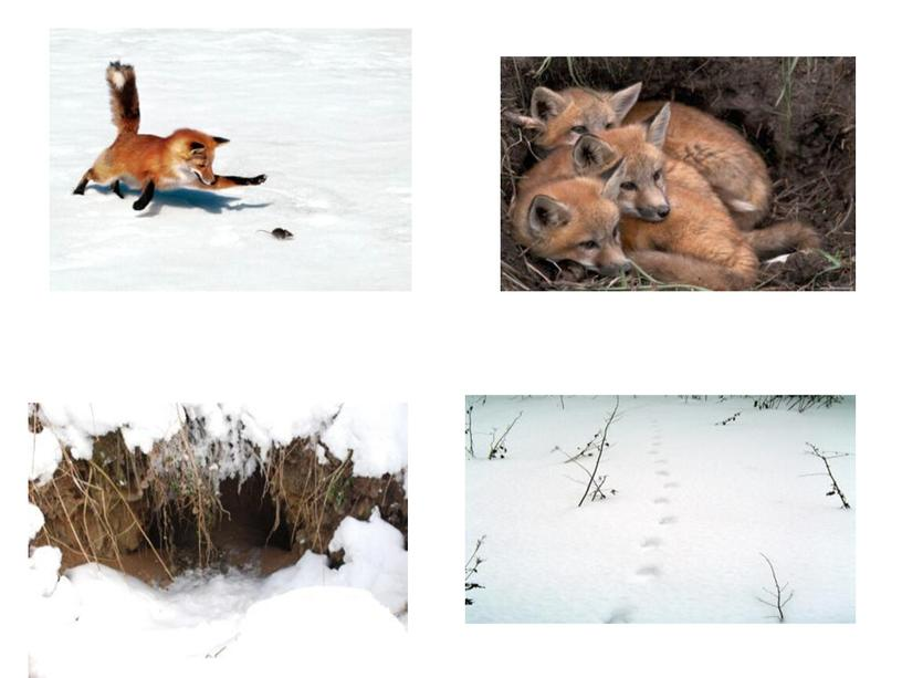 """Презентация """"Экскурсия в зимний лес"""""""