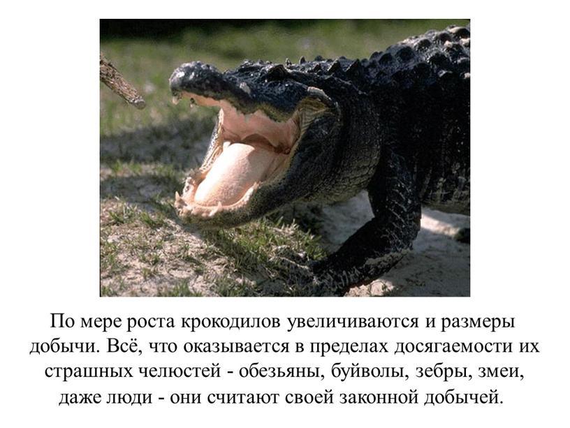 По мере роста крокодилов увеличиваются и размеры добычи