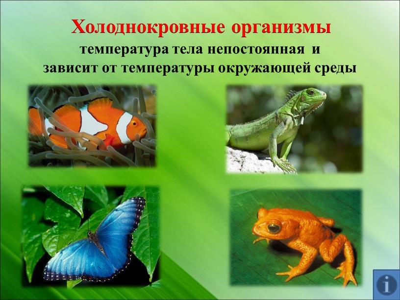Холоднокровные организмы температура тела непостоянная и зависит от температуры окружающей среды