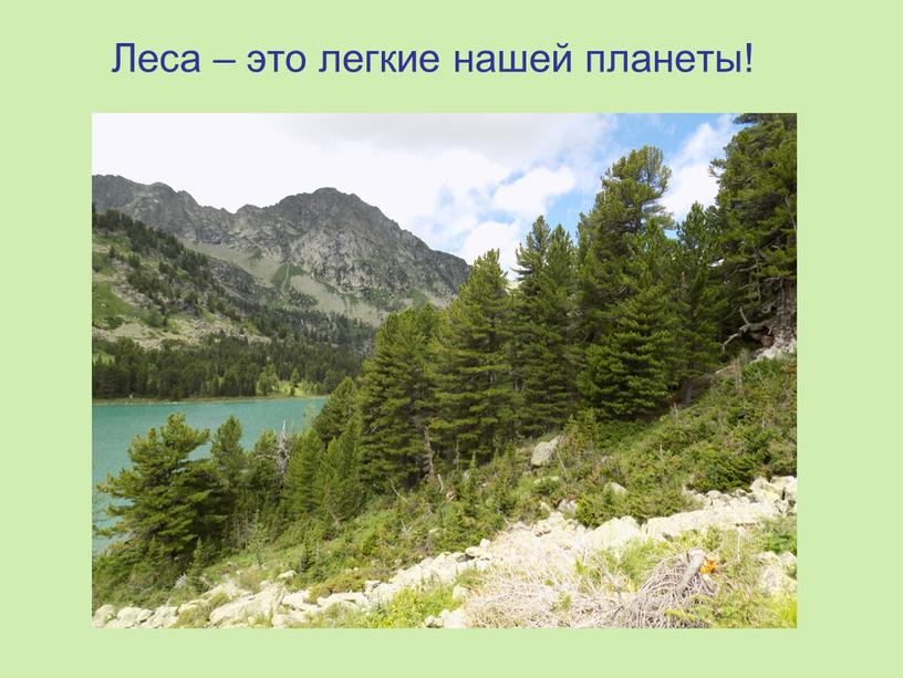 Леса – это легкие нашей планеты!