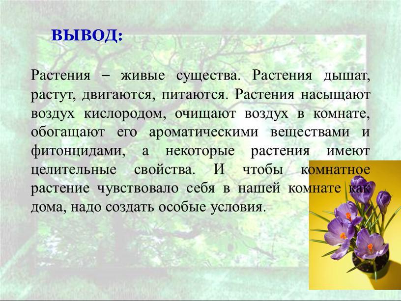 ВЫВОД: Растения – живые существа