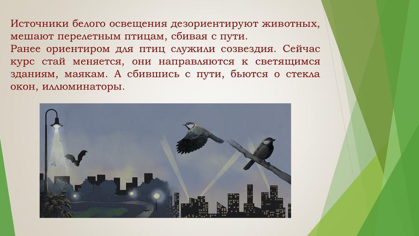 Источники белого освещения дезориентируют животных, мешают перелетным птицам, сбивая с пути