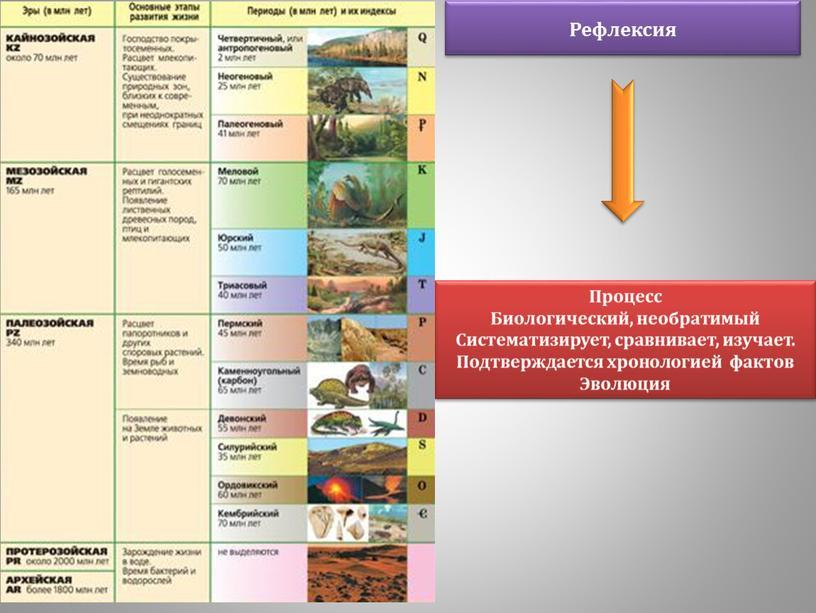 Процесс Биологический, необратимый