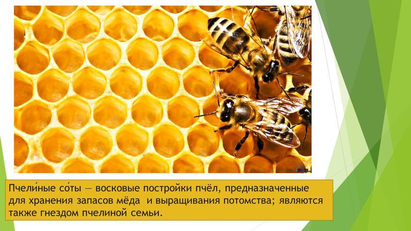 Пчели́ные со́ты — восковые постройки пчёл, предназначенные для хранения запасов мёда и выращивания потомства; являются также гнездом пчелиной семьи