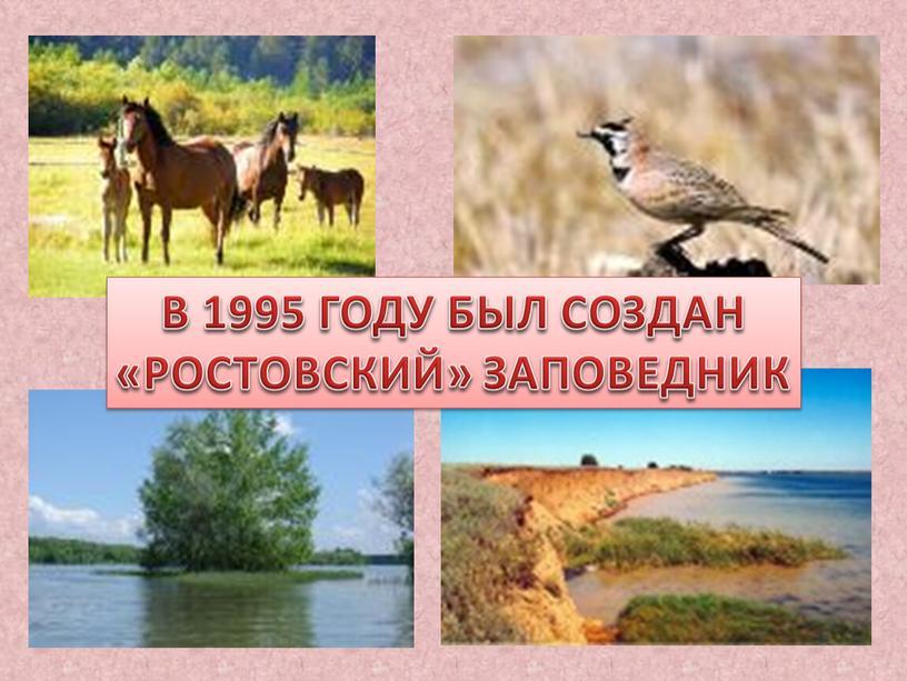 В 1995 ГОДУ БЫЛ СОЗДАН «РОСТОВСКИЙ»