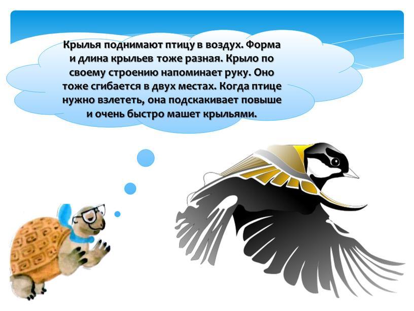 Крылья поднимают птицу в воздух