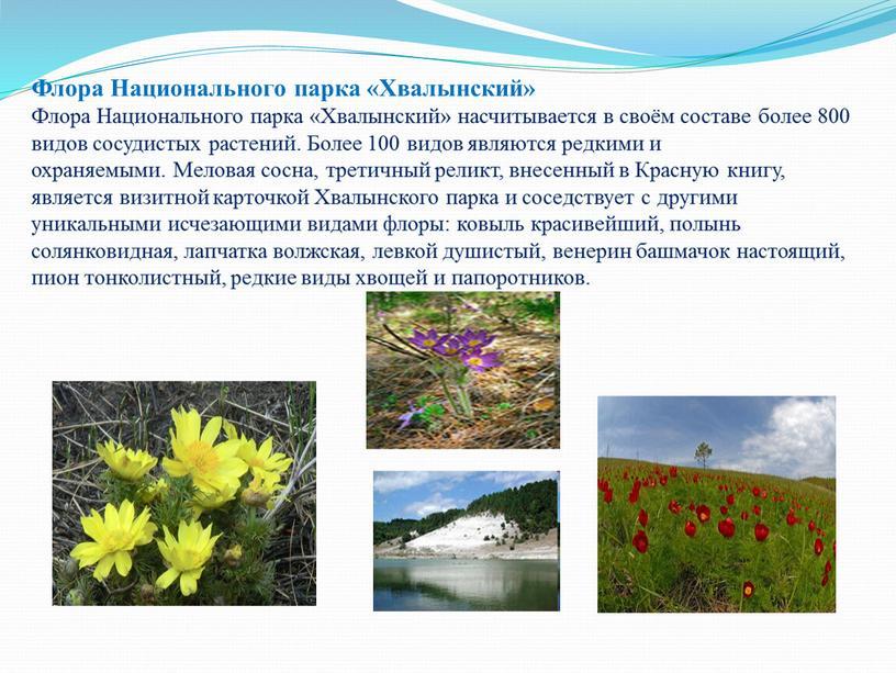 Флора Национального парка «Хвалынский»