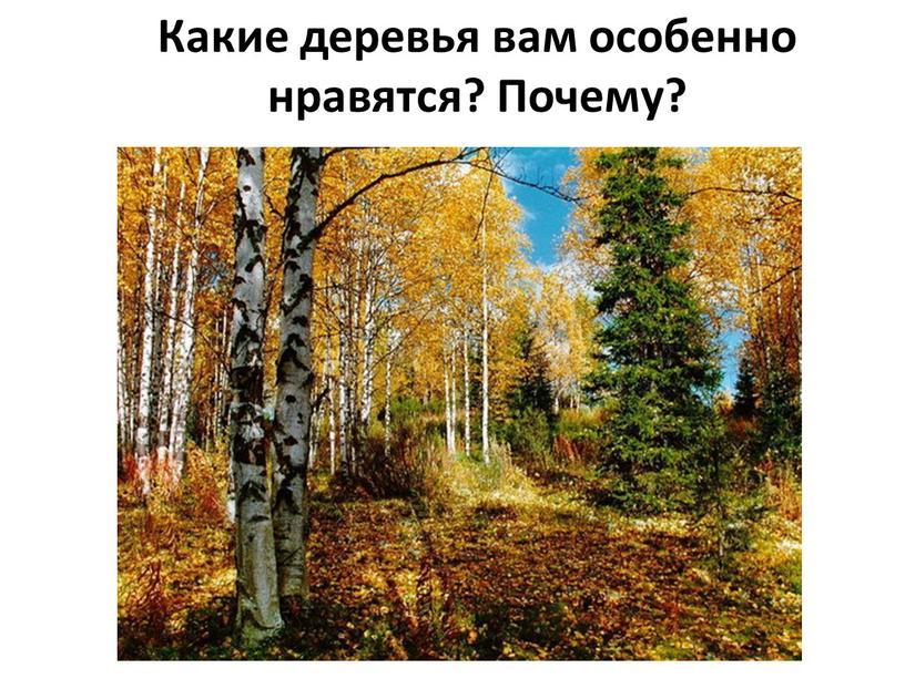 Какие деревья вам особенно нравятся?