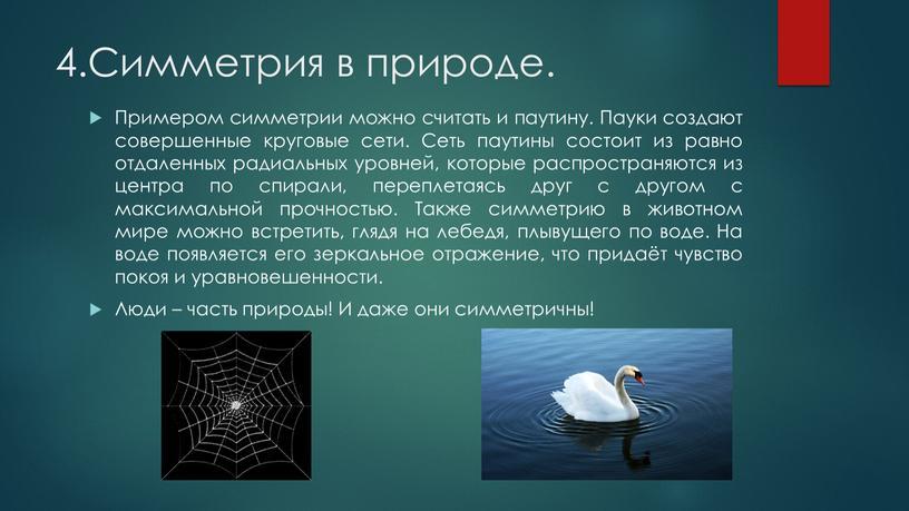 Симметрия в природе. Примером симметрии можно считать и паутину