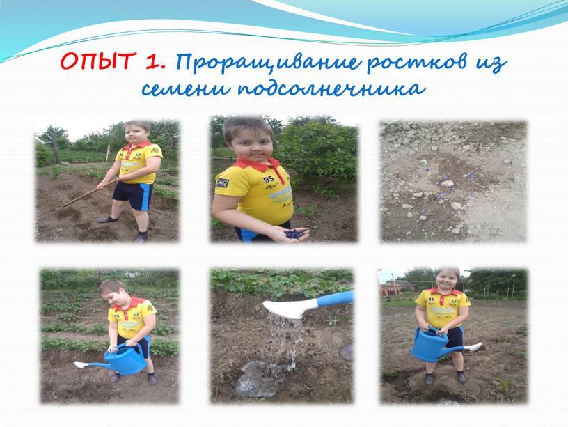 ОПЫТ 1. Проращивание ростков из семени подсолнечника