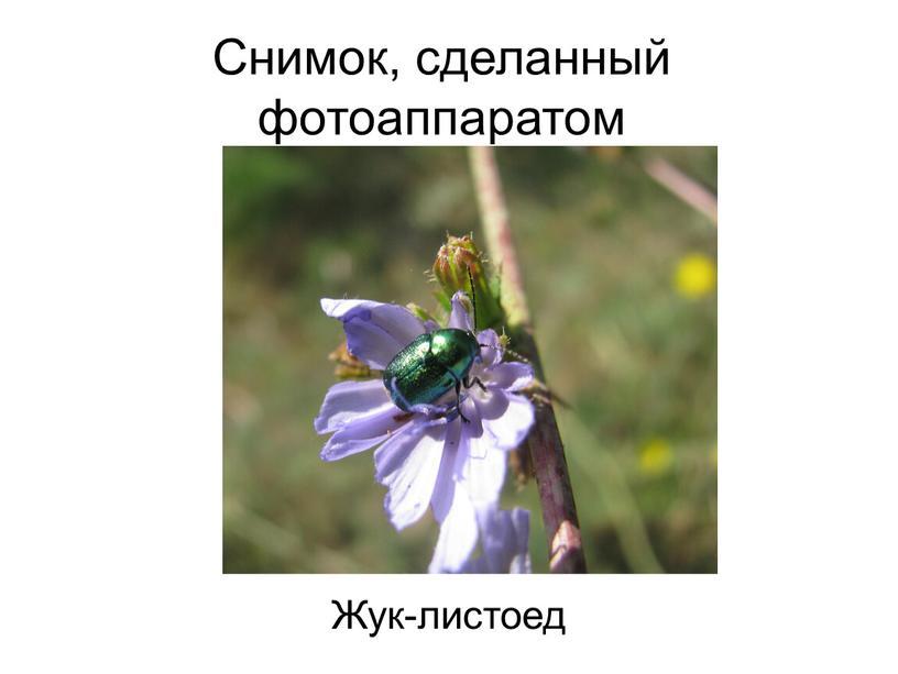 Снимок, сделанный фотоаппаратом