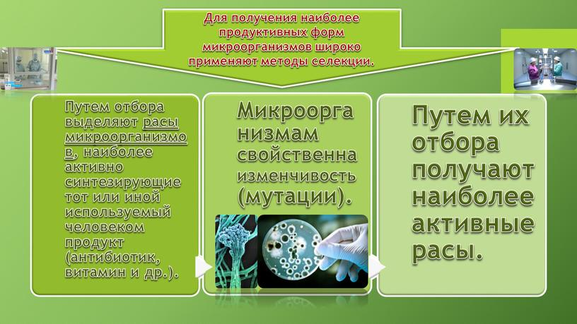 Для получения наиболее продуктивных форм микроорганизмов широко применяют методы селекции