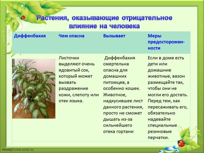 Растения, оказывающие отрицательное влияние на человека