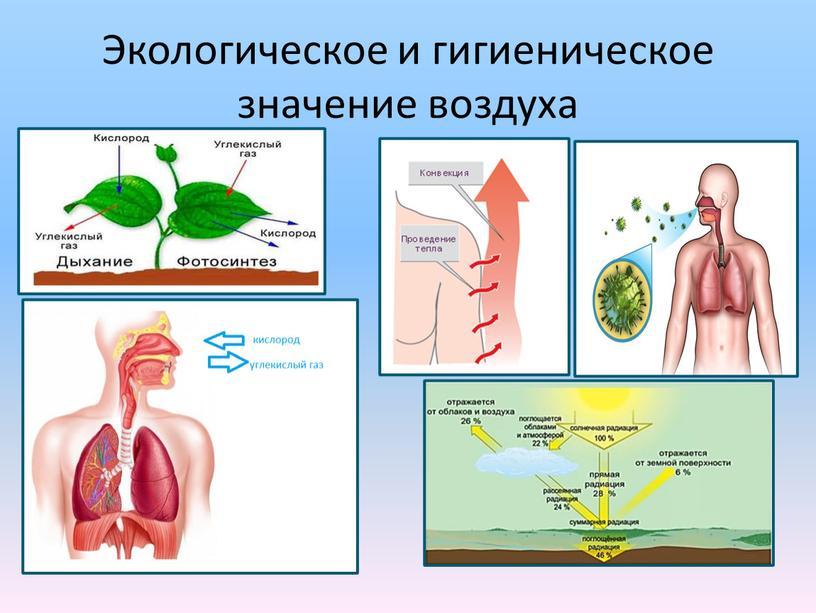 Экологическое и гигиеническое значение воздуха
