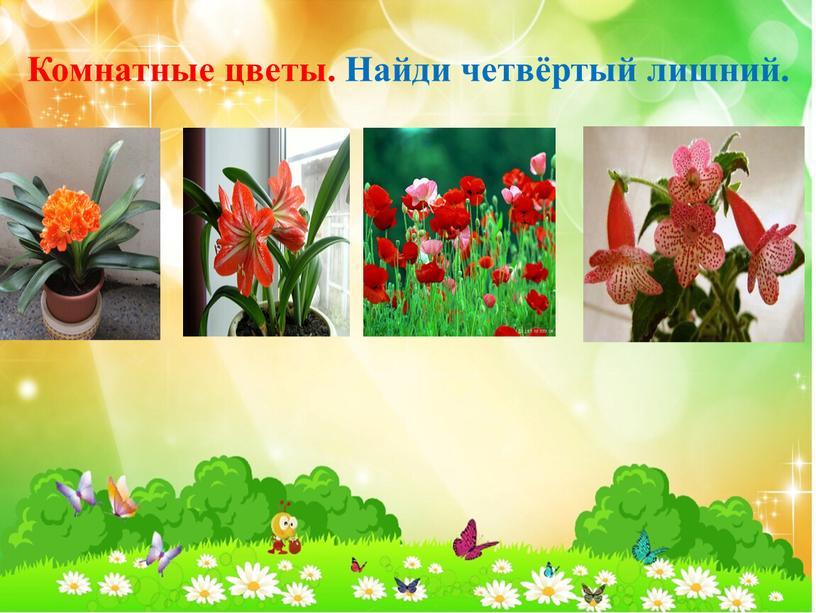 Комнатные цветы. Найди четвёртый лишний