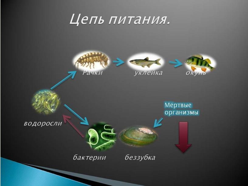 """Природная система """"Река"""""""