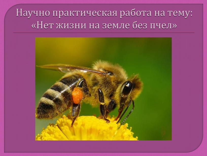 Научно практическая работа на тему: «Нет жизни на земле без пчел»