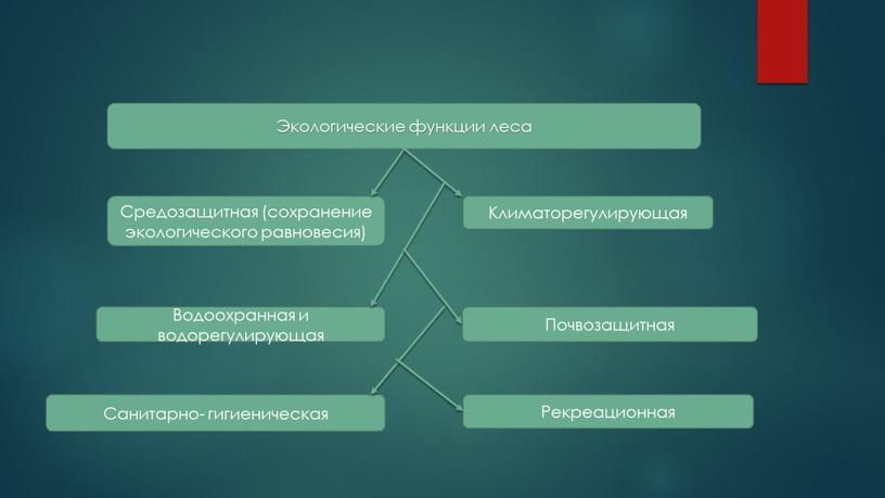 Экологические функции леса Средозащитная (сохранение экологического равновесия)
