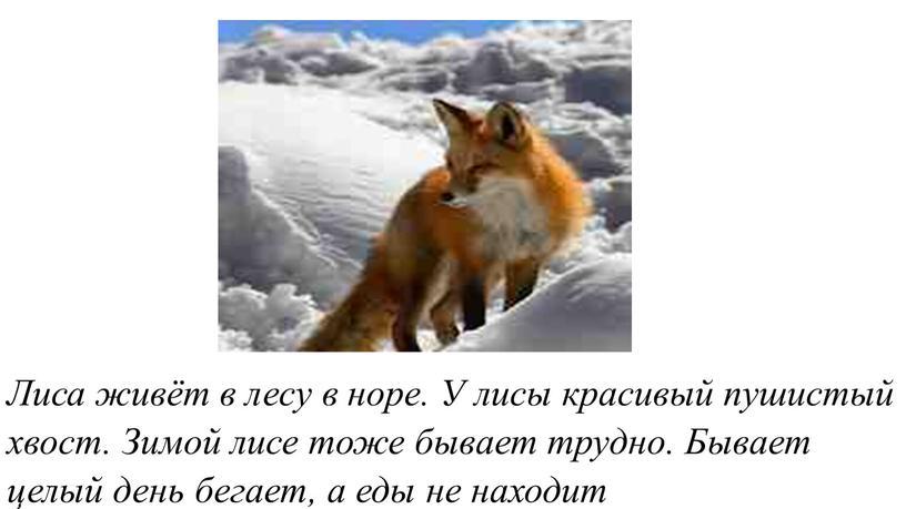 Лиса живёт в лесу в норе. У лисы красивый пушистый хвост