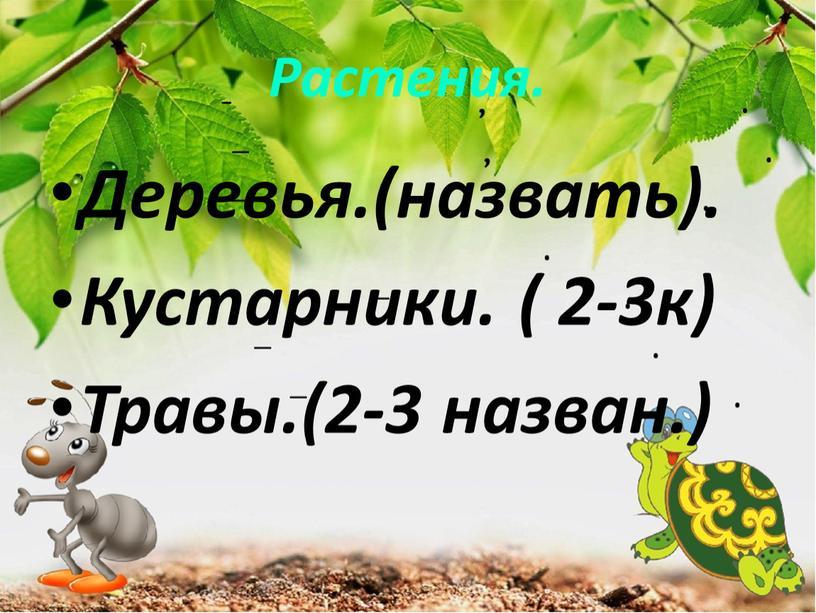 Растения. Деревья.(назвать). Кустарники