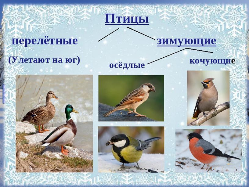 КАК ЗИМУЮТ ПТИЦЫ перелётные Зимующие: осёдлые (остаются зимовать)