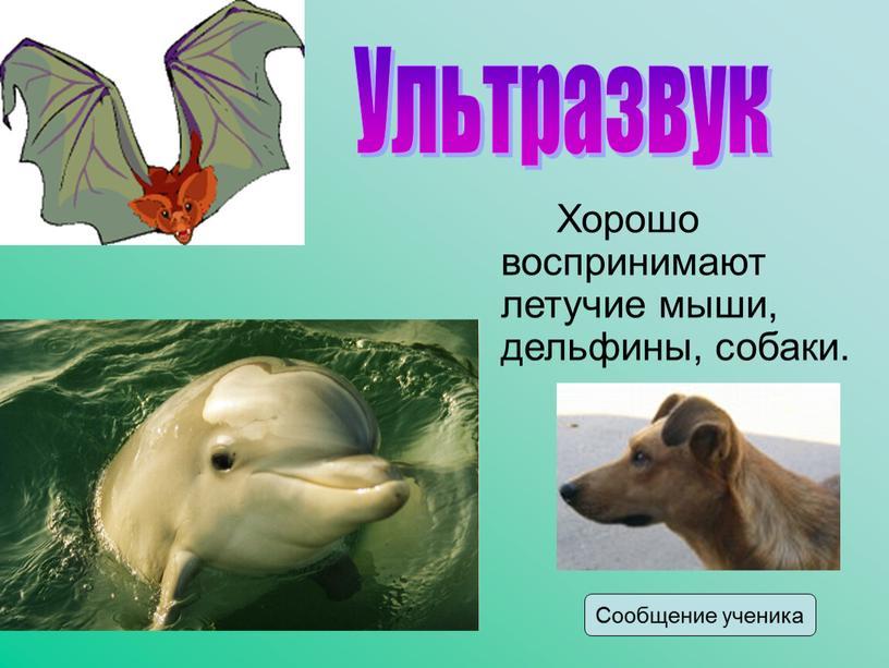 Хорошо воспринимают летучие мыши, дельфины, собаки