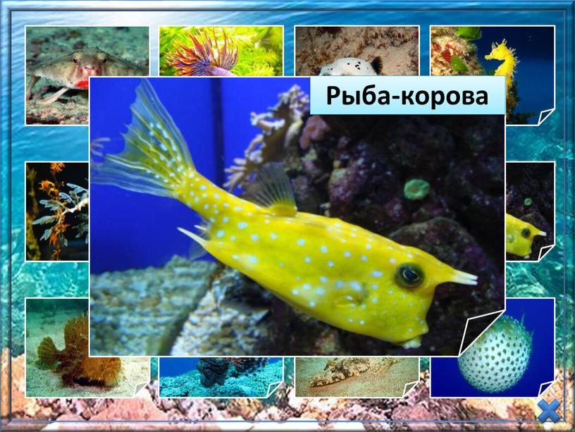 Презентация  «Необычные рыбы» (Окружающий мир,  1-4 класс)