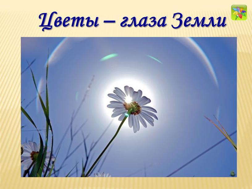 Цветы – глаза Земли