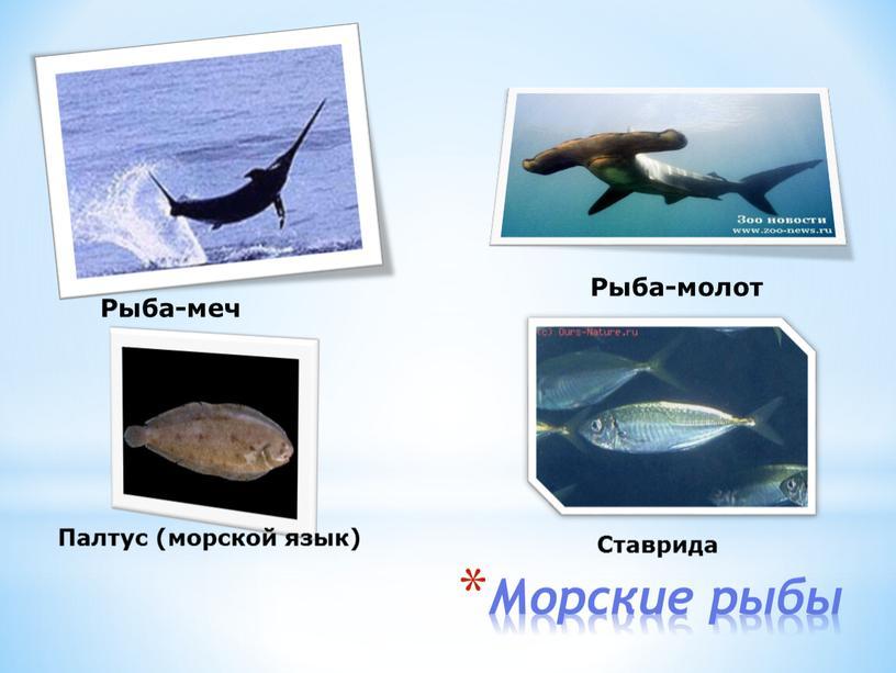 Морские рыбы Рыба-меч Рыба-молот