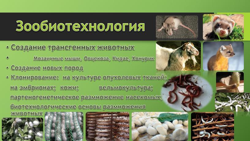 Зообиотехнология Создание трансгенных животных