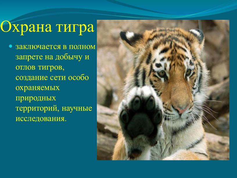 Охрана тигра заключается в полном запрете на добычу и отлов тигров, создание сети особо охраняемых природных территорий, научные исследования
