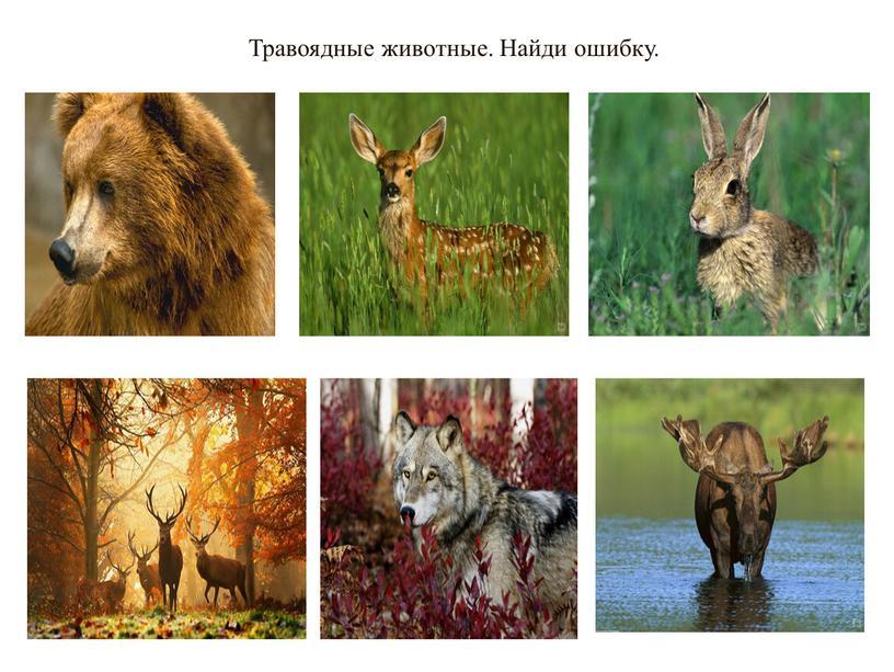 Травоядные животные. Найди ошибку