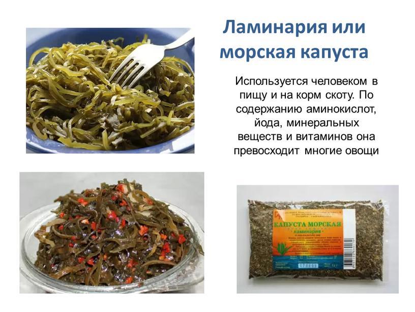 Ламинария или морская капуста