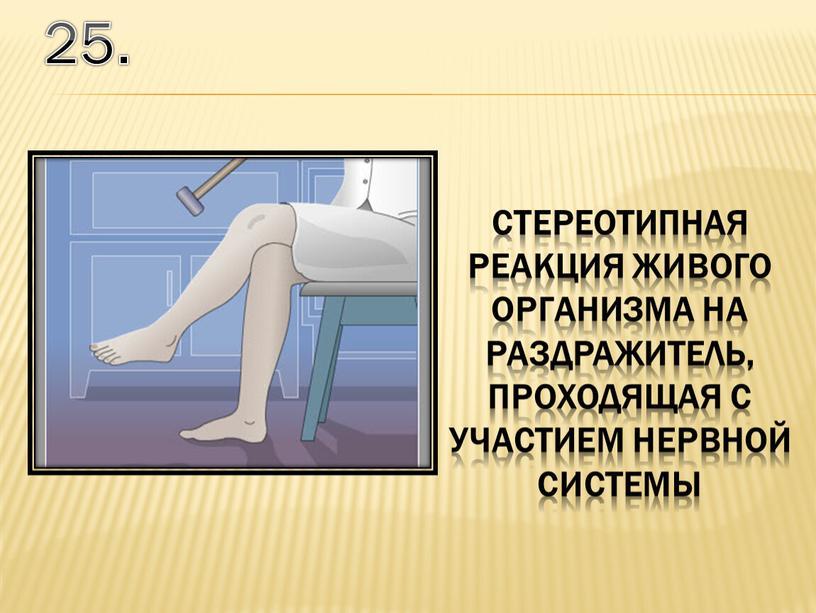 25. стереотипная реакция живого организма на раздражитель, проходящая с участием нервной системы