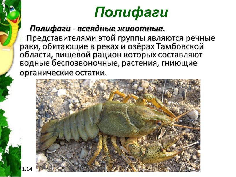 Полифаги Полифаги - всеядные животные
