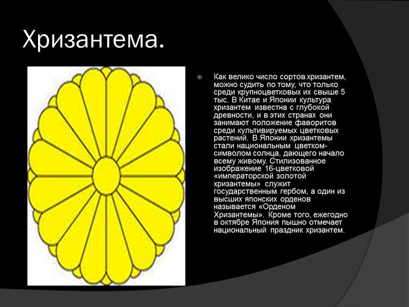 Хризантема. Как велико число сортов хризантем, можно судить по тому, что только среди крупноцветковых их свыше 5 тыс