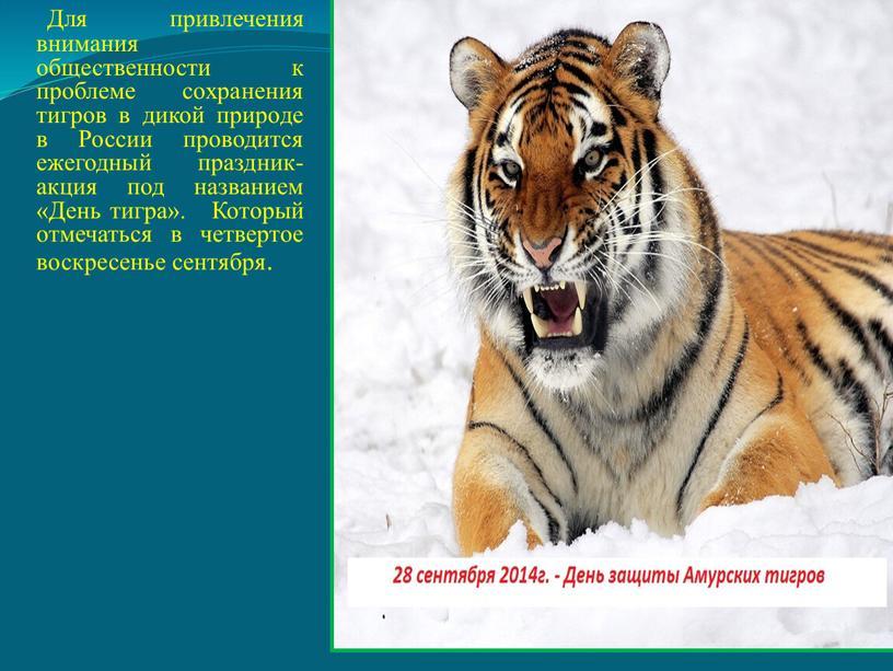 Для привлечения внимания общественности к проблеме сохранения тигров в дикой природе в