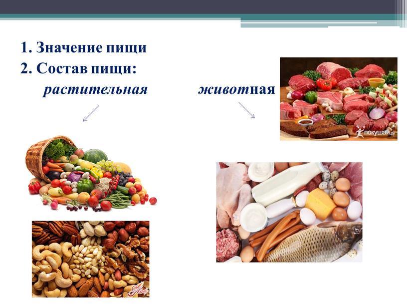 Значение пищи 2. Состав пищи: растительная живот ная