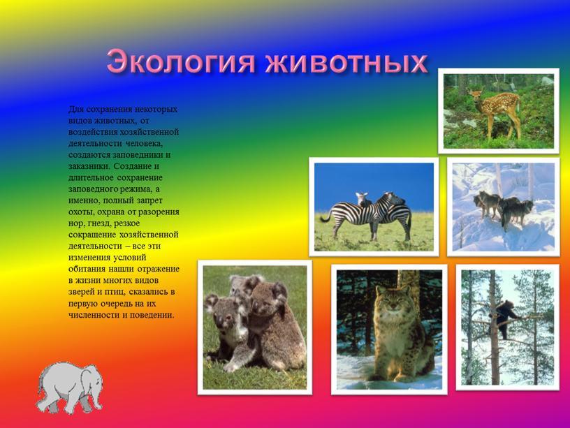Экология животных Для сохранения некоторых видов животных, от воздействия хозяйственной деятельности человека, создаются заповедники и заказники