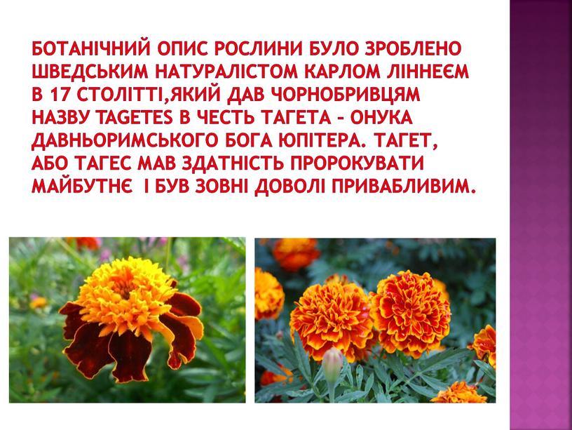 Ботанічний опис рослини було зроблено шведським натуралістом