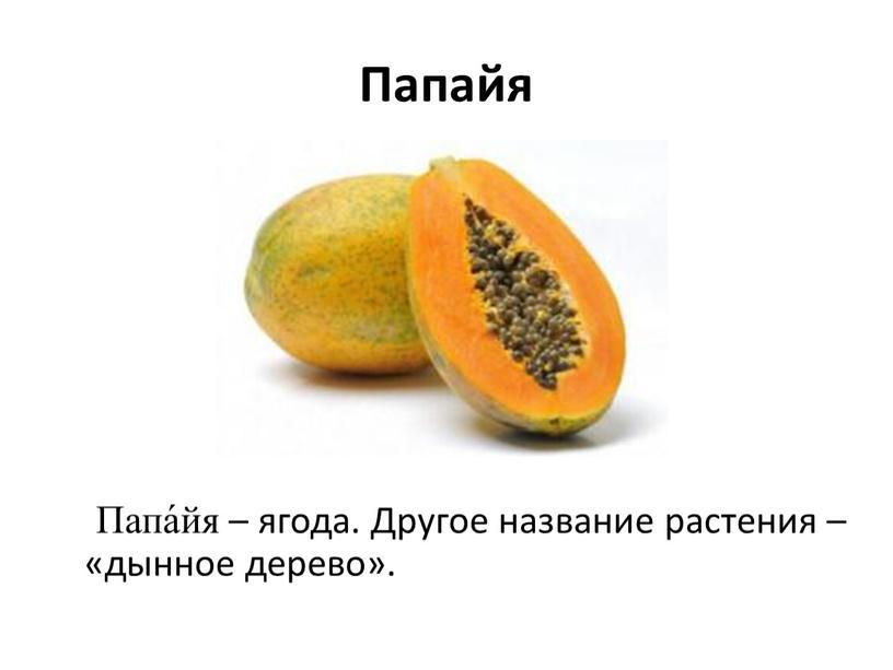 Папайя Папа́йя – ягода. Другое название растения – «дынное дерево»
