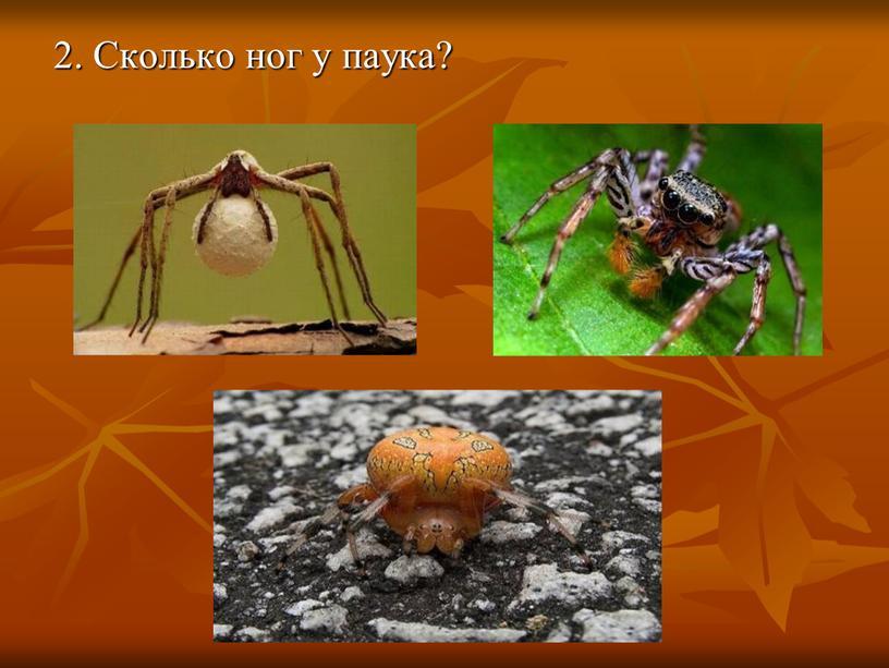 2. Сколько ног у паука?