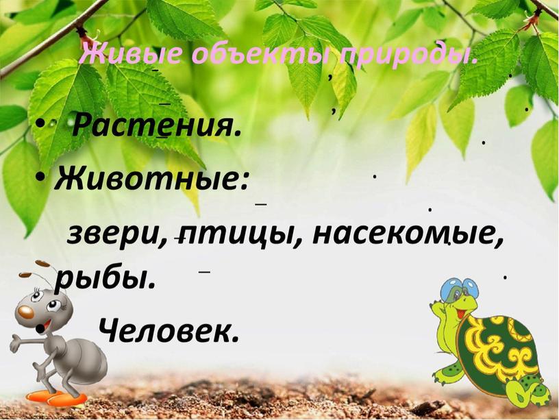 Живые объекты природы. Растения